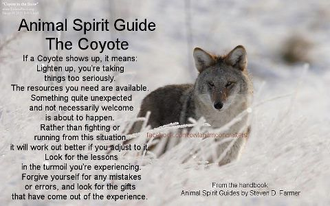 Your Animal Spirit Guide For April 29th Is The Coyote Animal Totem Spirit Guides Animal Spirit Guide Spirit Guides