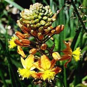 Azalia Feuerwerk Uprawa Wymagania Sadzenie Aktualnosci Ogrodnicze Zielony Ogrodek Flowers Plants Azalia