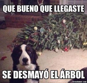Memes De Perros Solo Los Mejores Y Mas Chistosas Memes Perros Imagenes Divertidas De Animales Humor Divertido Sobre Animales