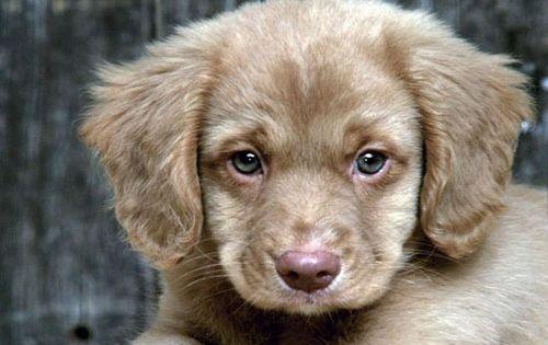 Small Hypoallergenic Non Shedding Dogs Google Search