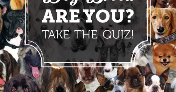 Dog Breed Quiz Dog breeds and Dog