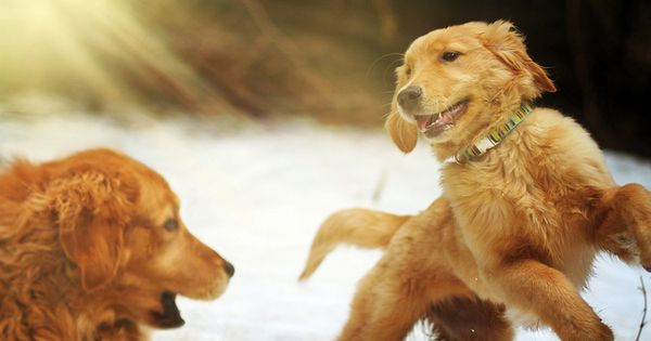 At Play Baby Dogs I Love Dogs Dog Love