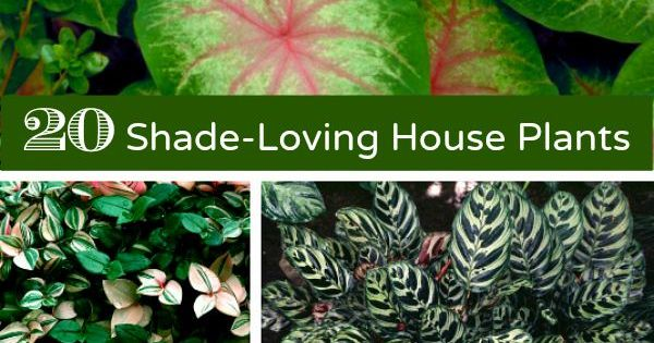 List Of 20 Common Indoor House Plants That Thrive In Full