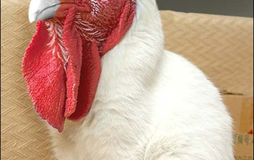 #Pets Dogs Cats Deals Discounts Bargains Pet http://help411.blogspot.com/p/pets.html