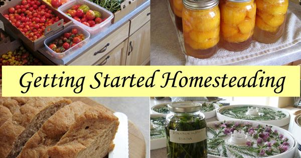 Getting Started Homesteading - Articles for Beginners Featuring Homesteading Basics - Over 20 posts to help you become more self-reliant homesteading self-reliance