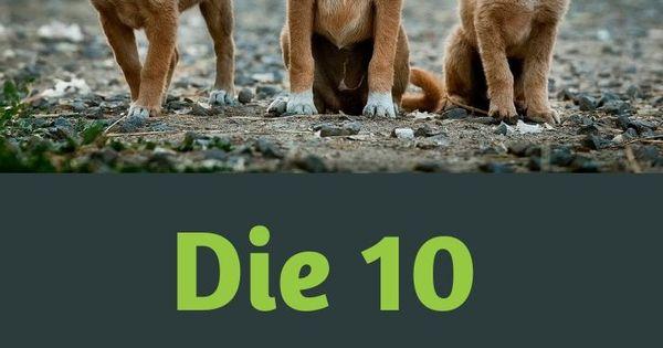 Naturlich Sind Alle Hunde Toll Keine Frage Aber Hast Du Eine Idee Welche Hunderasse Die Beliebteste Ist Das I Hunderassen Beliebte Hunderassen Hunde Rassen