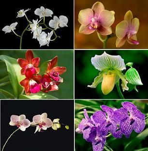Orchid Types Orchid Types Are Classified According To Their Physical Traits That Include Color Of Flower Shape Of Types Of Orchids Orchids Beautiful Orchids