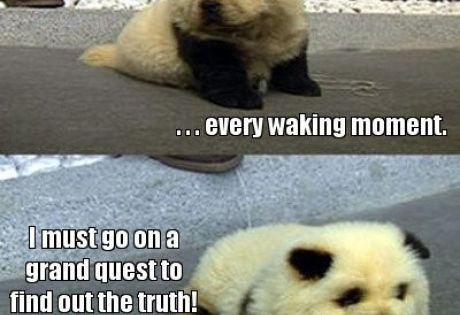 I NEED THIS PANDA PUPPY!!!! One of the cutest things in the