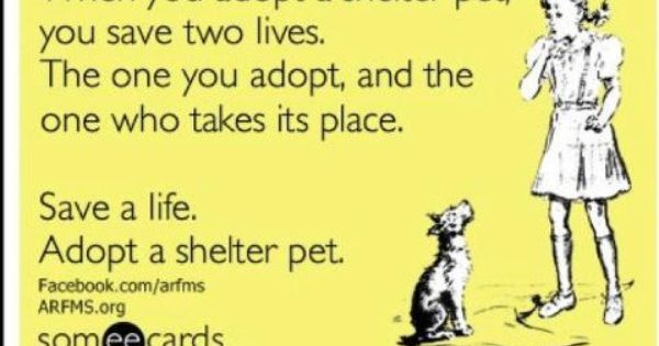 Nearest Place Where You Can Adopt A Dog