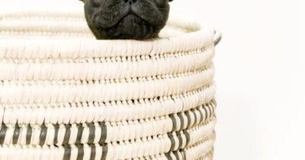 Peek a boo french bulldog