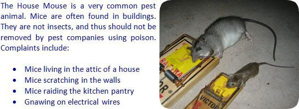 How To Get Rid Of Mice In The House Attic Renovation Attic