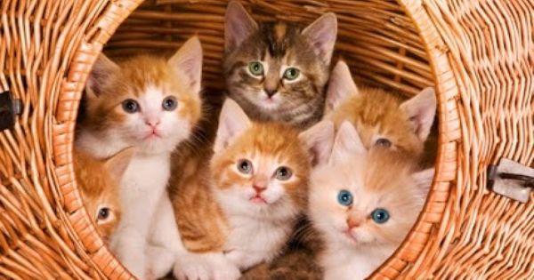 Http Gobtube Com Cute Cats Kittens Cutest Kitten Art Cats And Kittens