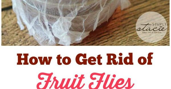 how to get rid of fruit flies the fruit dads and my dad. Black Bedroom Furniture Sets. Home Design Ideas