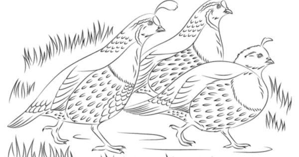 California Quails Coloring Page Free Printable Coloring Pages Farm Animal Coloring Pages Bird Coloring Pages Animal Coloring Pages