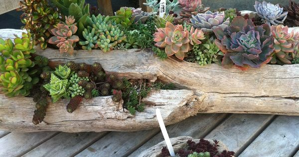 Driftwood Planter. Plant Depot, Dana Point