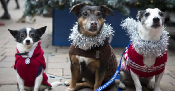A Get Santa Christmas Tour Of London Battersea Dogs Dog Cat Christmas Jumper Day
