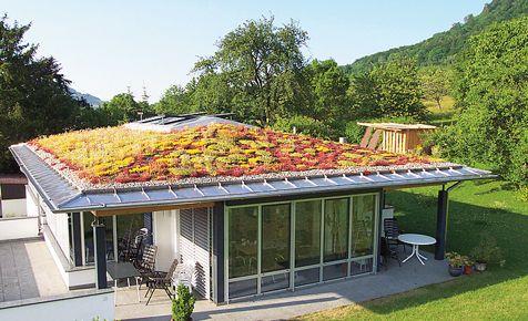 Dachbegrunung Selbst De Dachbegrunung Grundach Extensive Dachbegrunung
