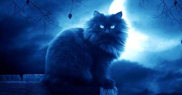 Moon Blue Kitten Desktop Nexus Wallpapers Cat Wallpaper Cat Background Warrior Cats