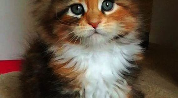 Cute Animals And Their Names Cute Kitten Names With Blue Eyes At