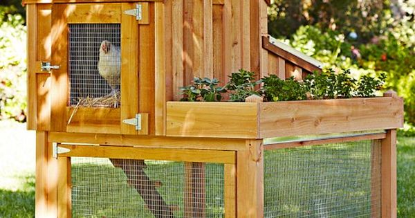 Cedar Chicken Coop and Run with Planter | Williams Sonoma
