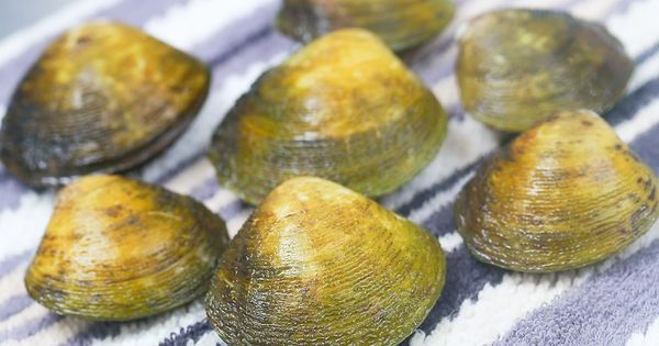How To Steam Clams 12 Steps With Pictures Recipe Steamed Clams Clams Paleo Gluten Free