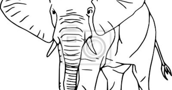 Contour Line Drawing Elephant : Elephant contour line drawings pinterest
