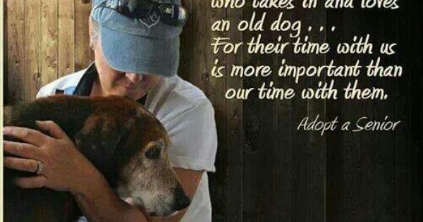 Adopt A Senior Senior Dogs Quotes Old Dogs Dogs