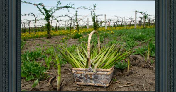 pick farm garden patch farms 14158 w 159th street homer glen il