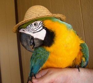Blue Macaw Parrot Hat