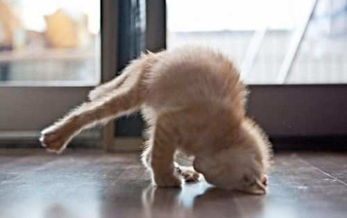 Yoga Funny Pics | Animal Yoga Poses (19 Pics)