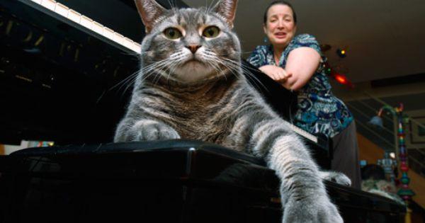 Betsy The Piano Cat