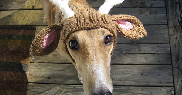 Funny Dog: Reindeer Hat @Tina Thomas we need this for Ben