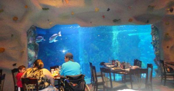 This New Denver Aquarium Fun Things To Do In Denver