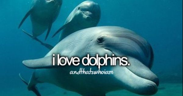 Dolphin underwater - beautiful!!