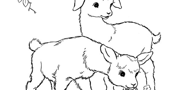 image detail for farm animal coloring pages printable kid goats coloring page and. Black Bedroom Furniture Sets. Home Design Ideas
