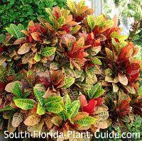 4477554a9accee04da008ac92e680e2e - Gardening In South Florida What To Plant