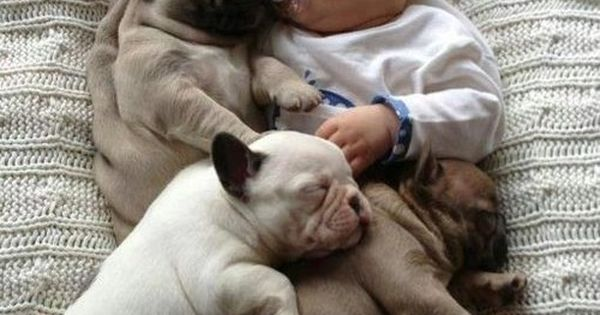 Pug blanket... so sweet