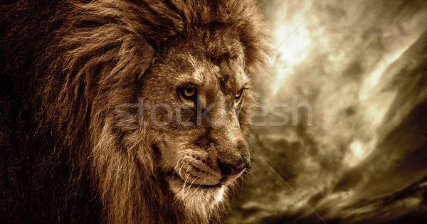 Lion Against Stormy Sky Stock Photo C Nejron 4306457 Stockfresh Lion Background Animal Wallpaper Lion Wallpaper