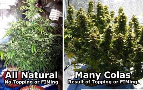 Which One Would You Rather Grow Getting Your Plants To