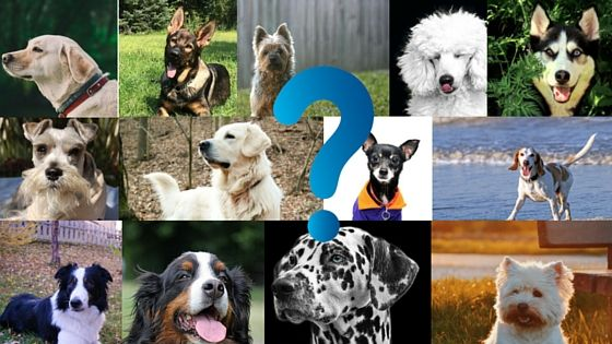What Are The Best Dog Breeds For Me Try This Quiz Dog Breed Quiz Dog Activities Dogs
