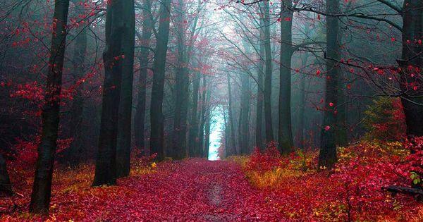 Black Forest Tourism Germany Next Trip Tourism Nature Pinterest Black Forest Tourism
