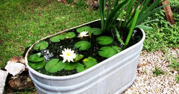 Koi Pond In A Tub Secret Garden Pinterest Water