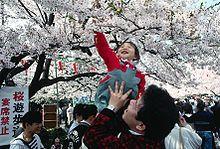 Wikipedia On Hanami Hanami Japan Cherry Blossom Festival