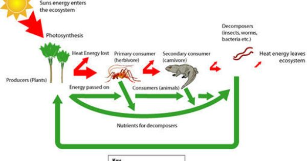 Online Help With Living Organism And Environment Assignments Living Organism And Environment Homework Help Ecosysteme