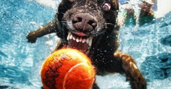 Dog Jumping Into Swimming Pool Update A New Set Of Original