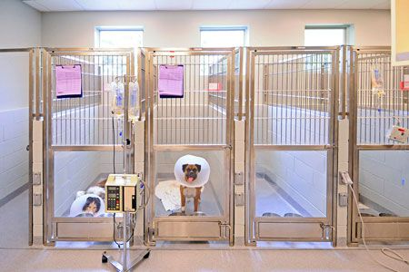 Veterinary Icu Kennels Veterinary Hospital Hospital Design Pet