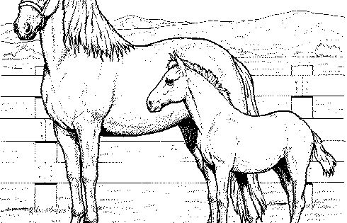 Coloringpages1001 Com: Lots Of Nice Horse Coloring Pages On This Page. Easy To