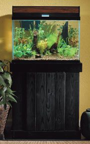 Step By Step Guide To Setting Up A Planted Aquarium Drs Foster Smith Planted Aquarium Aquarium Turtle Aquarium