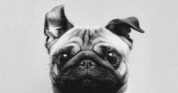 Imagen vía We Heart It https://weheartit.com/entry/164219541 animal bff cute dog friend love