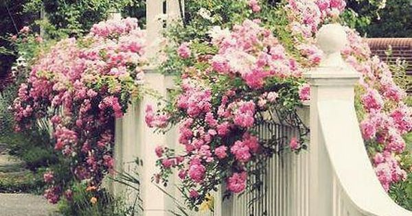 White picket fence, arbor, climbing roses, historic template.